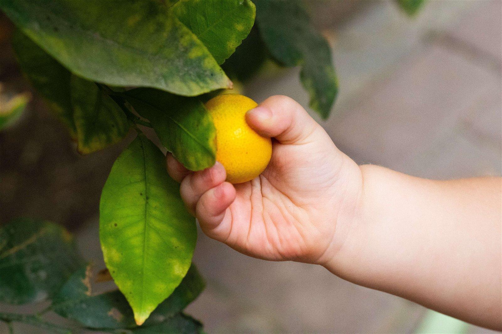 Desserts aux fruits pour bébé bio